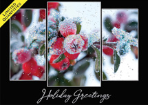 Morning Frost Holiday Cards